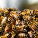 Beehives as a Model for Team Work and Successful Business